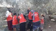 المنظمات الجماهيرية للجبهة الديمقراطية تنظم حملة تطوعية لجني الزيتون في رفح